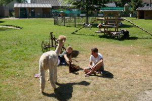 Vrouw aait alpacaveulen, alpacamoeder en man kijken toe